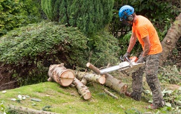 additional services offered by Brampton tree surgeons