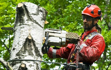 dangers of DIY tree surgery