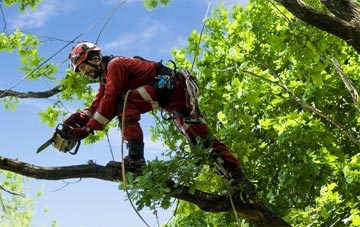 find trusted rated Brampton tree surgeons