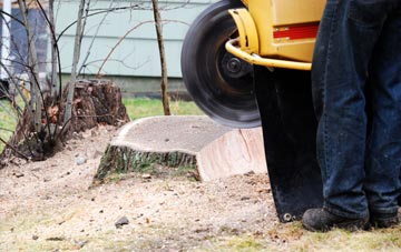 rated Brampton tree stump removal companies