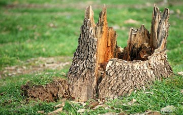 tree stump removal Brampton