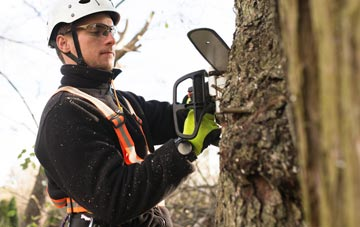 Brampton tree surgery costs