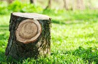 Brampton tree stump removal services