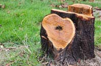 free Brampton tree stump removal quotes
