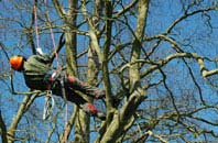 Brampton tree surgery services