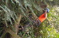 free Brampton tree surgery quotes